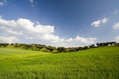 Landscape with blue sky. Beautiful landscape with green grass and blue sky Stock Photo