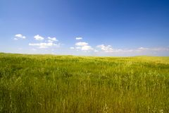 Landscape with blue sky. And grass Royalty Free Stock Photo