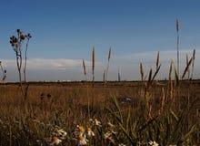 Landscape blue sky field flowers grass building sunlight sunset clouds Saint-Petersburg. Blue sky white clouds field grass flower close-up landscape royalty free stock photo