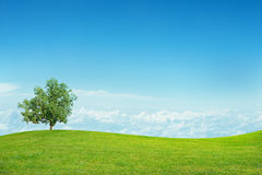 Landscape with blue sky Royalty Free Stock Image