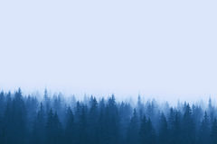 Landscape in blue tones - pine forest in mountains with fog Stock Photo