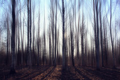 Landscape  blurred autumn forest Royalty Free Stock Images