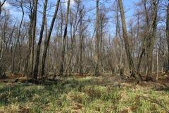 Landscape with bog in forest. Nice spring landscape with bog in forest stock image