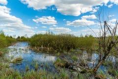 Bog under nice cluds. Landscape with bog under nice clouds royalty free stock image