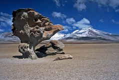 Landscape in Bolivia,Bolivia. Landscape in Bolivia called desert of dali Royalty Free Stock Images