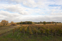 Landscape in Bordeaux in autumn Stock Image