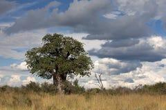 Landscape Botswana. Botswana. Travel for Animals and Landscape Africa Stock Image