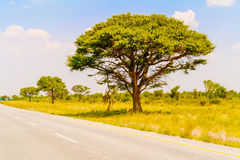 Landscape in Botswana. Landscape and trees in Botswana near Nata Royalty Free Stock Images