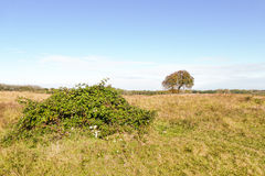 Landscape with bramble. Royalty Free Stock Image