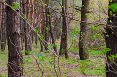 Landscape after branches. NForest miracle Stock Photos