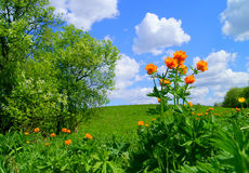 Landscape with bright flowers Royalty Free Stock Images