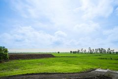 Landscape of bright green farm with sunlight in blue sky Stock Photo