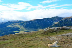 Landscape with the Bucegi mountains. Royalty Free Stock Photo