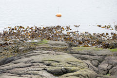 Landscape with buoy and kelp Stock Photos