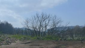 Landscape of burned tree without leaves stock footage