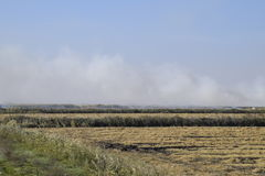 Landscape burning field. The burning of rice straw in the fields. Rice paddies Stock Images