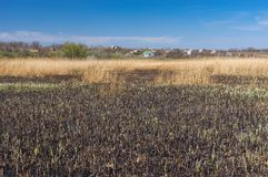 Landscape with burnt rush on a small river. At spring season Royalty Free Stock Photo