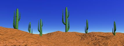 Landscape cactus in desert Royalty Free Stock Photo
