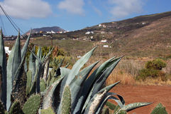 Landscape and cactus in Tenerife, Canaries Royalty Free Stock Image