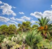 Landscape with cactus Stock Photo