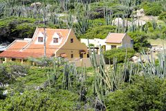 House based in vegetation with cacti on Hooiberg, Aruba Royalty Free Stock Image
