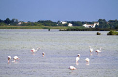 Landscape of the Camargue Stock Images