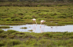 Landscape of the Camargue Stock Image