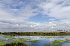 Landscape of the Camargue Royalty Free Stock Images