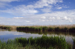 Landscape of the Camargue Royalty Free Stock Photo