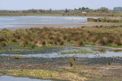 Landscape of Camargue, France. Natural park - ornithology reservation Camargue, Provence, France Stock Photo
