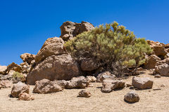 Landscape on the canarian island Tenerife Royalty Free Stock Image