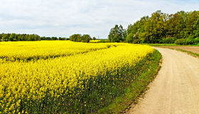 Landscape with canola field. Stock Images