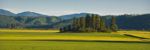 Landscape with canola and wheat fields Royalty Free Stock Photos