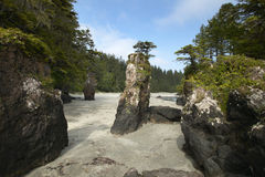 Landscape in Cape Scott Park. Vancouver. Canada Royalty Free Stock Photography