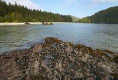 Landscape in Cape Scott Park. Vancouver. Canada Stock Image