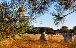 Landscape in Carnac Stock Photography