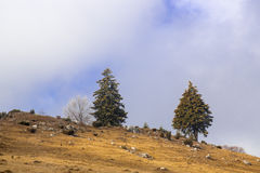 Landscape in Carpathian 3. Frost landscape trees snow Stock Images