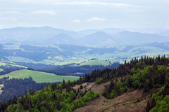 Landscape of a Carpathians mountains with fir-tree and grassy va Stock Photos