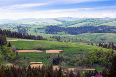 Landscape of a Carpathians mountains with fir-tree and grassy va Stock Photography