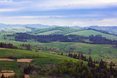 Landscape of a Carpathians mountains with fir-tree and grassy va Stock Image