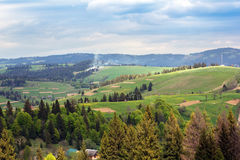 Landscape of a Carpathians mountains with fir-trees and grassy v Stock Images