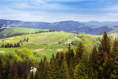 Landscape of a Carpathians mountains with grassy valley and fir- Royalty Free Stock Image