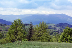 Landscape of a Carpathians mountains with green trees and fir-tree Royalty Free Stock Images