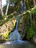 Landscape of a cascading stream Royalty Free Stock Images