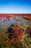 Landscape Caspian sea in Kazakhstan. Landscape with Caspian sea shore in Kazakhstan royalty free stock photography
