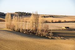 Landscape in Castile and Leon, Spain. Dry and warm landscape in winter in the fields of Peleas de Arriba, Province of Zamora, Castile and Leon, Spain Royalty Free Stock Images