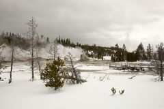 Landscape with Castle Geyser in Upper Geyser Basin, Yellowstone Royalty Free Stock Photos