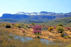 Landscape in the Cederberg, South Africa. Landscape and rocks in the Cederberg, Republic of South Africa Stock Photos
