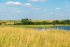 Landscape in central Russia in August. Front focus Stock Photos