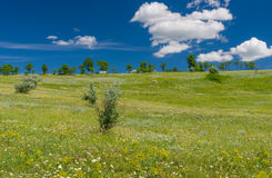 Landscape in central Ukraine Stock Photography